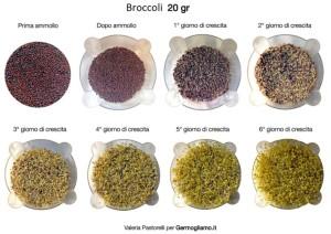 germogli-broccoli-germinazione