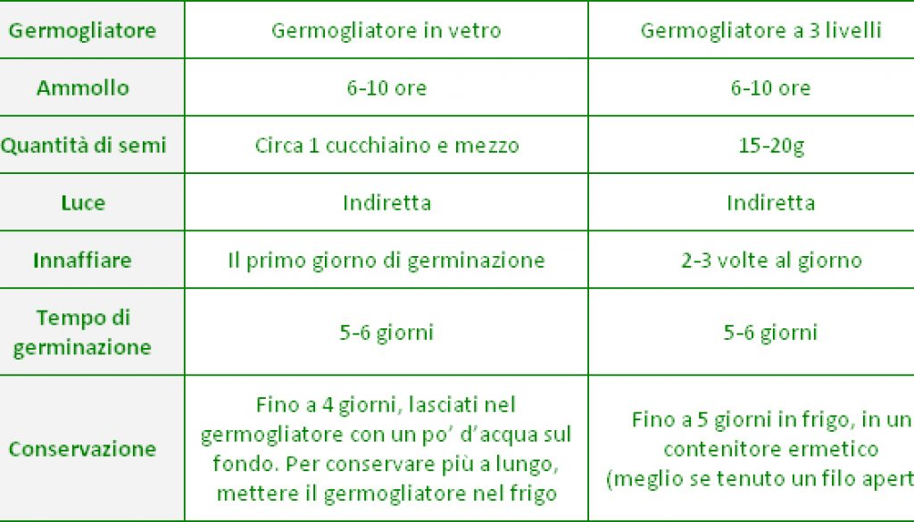 cavolo-consigli-germinazione