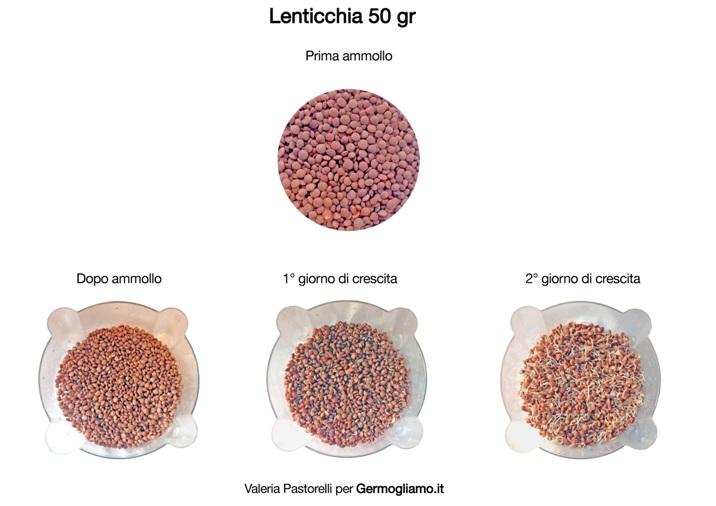 germogli-lenticchie-germinazione