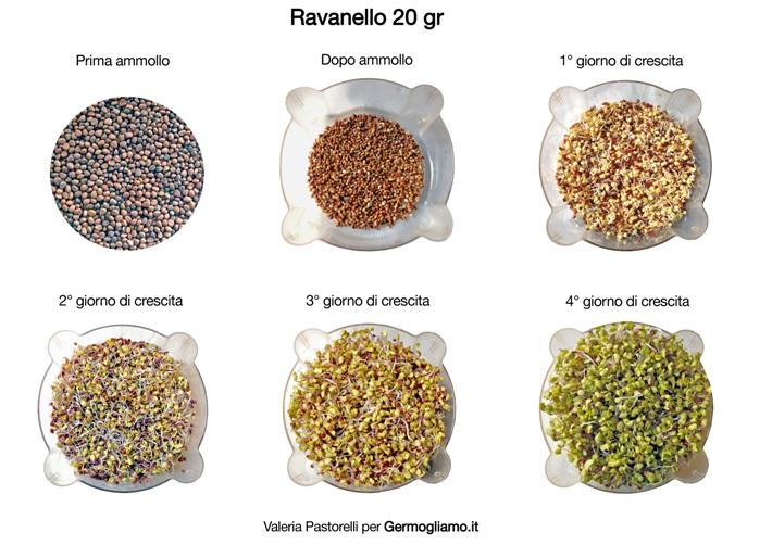 germogli-ravanello-consigli-germinazione