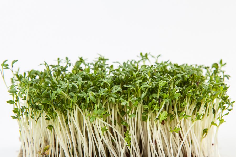 germogli di crescione