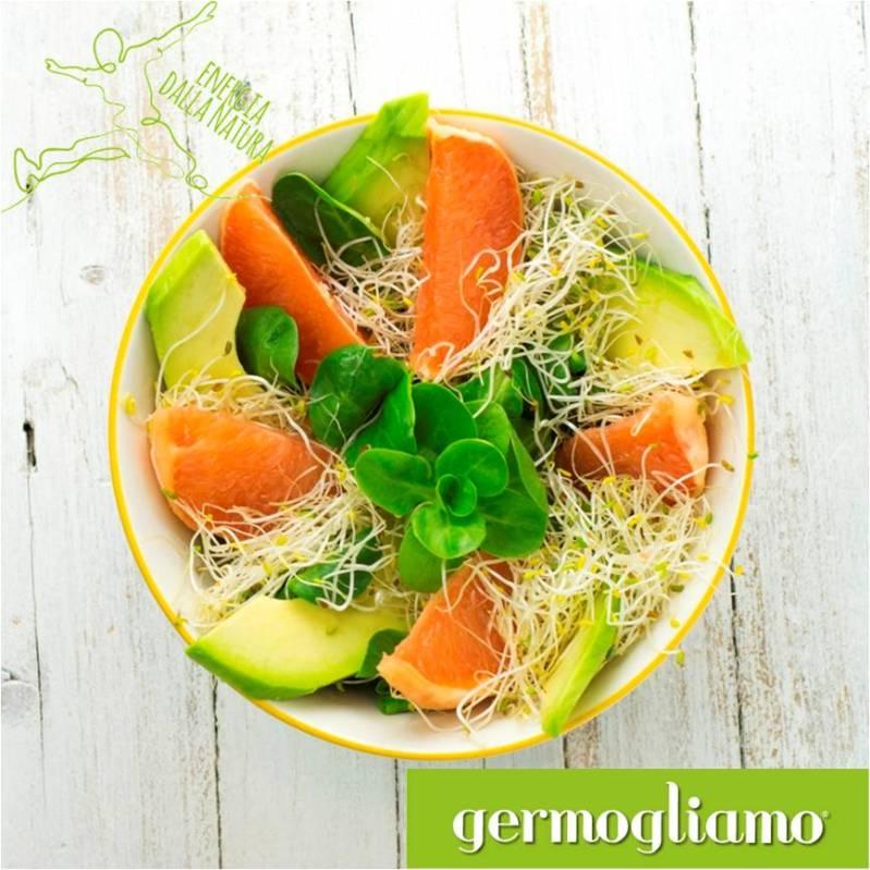 insalata-germogli-alfalfa-crescione-avocado