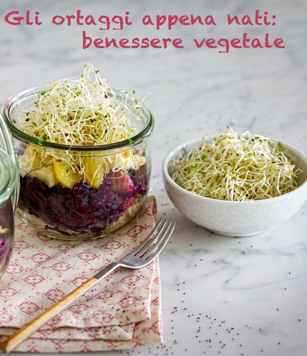schiscetta-cavolo-germogli-alfalfa-2