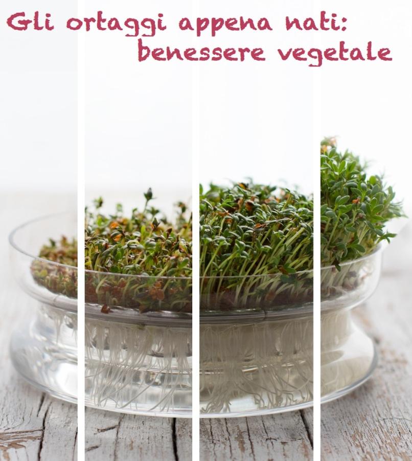germogli-crescita-crescione-ortaggi